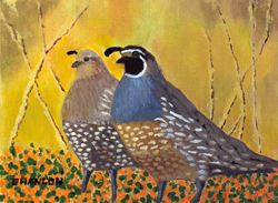 California Quail and Poppies